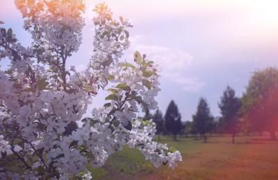 16 апреля в яблоневом саду по адресу: Коломенский проезд, д. 21 прошел массовый экологический субботник