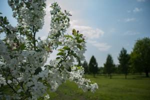 до конца весны на улицах Нагатино-Садовников высадят несколько десятков деревьев и кустарников