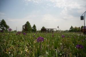 В местном парке для жителей района подготовят насыщенную программу