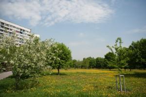 Праздничный концерт пройдет в парке в районе Нагатино-Садовники