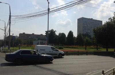 На разделительной полосе вдоль проспекта Андропова появятся новые деревья и кустарники