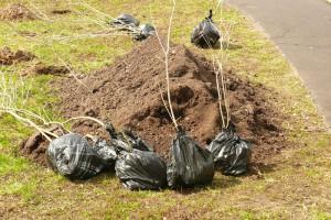В одном из дворов района решено посеять газон и высадить дополнительные растения