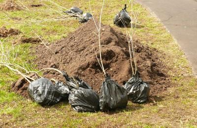 С помощью «Активного гражданина» москвичи выберут, в каких дворах в следующем году высадят новые деревья