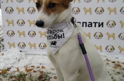 Специалисты проконсультировали владельцев собак по вопросам ухода за четвероногими