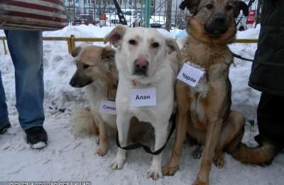 Плановая ежегодная вакцинация кошек и собак от бешенства пройдет в районе Нагатино-Садовники
