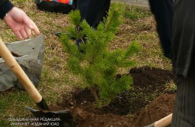 Работы по озеленению в Южном окурге