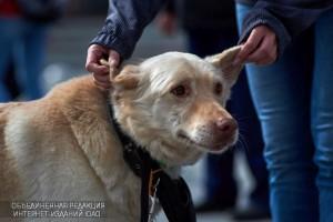 В парке «Садовники» прошла выставка собак