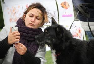 На выставке собак из приюта