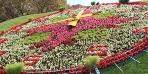 Цветочные часы на Поклонной горе украсят более 12 тысяч виол