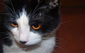 На территории района пройдет Международная кошачья выставка