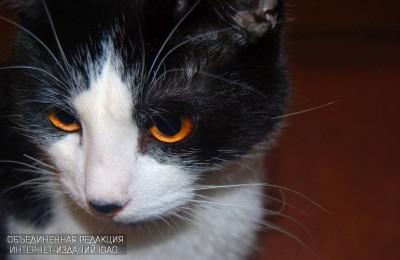 Выставка кошек пройдет в районе Нагатино-Садовники