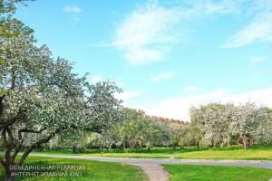 Яблоневый сад в районе Нагатино-Садовники