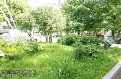 Зеленые насаждения в районе Нагатино-Садовники
