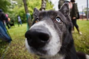 Благотворительная выставка четвероногих прошла в парке «Садовники»