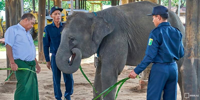 «Уголок дедушки Дурова» проведет конкурс имен для трех слонят