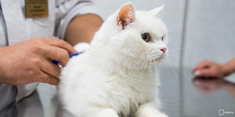 Стартовала бесплатная вакцинация домашних животных от бешенства