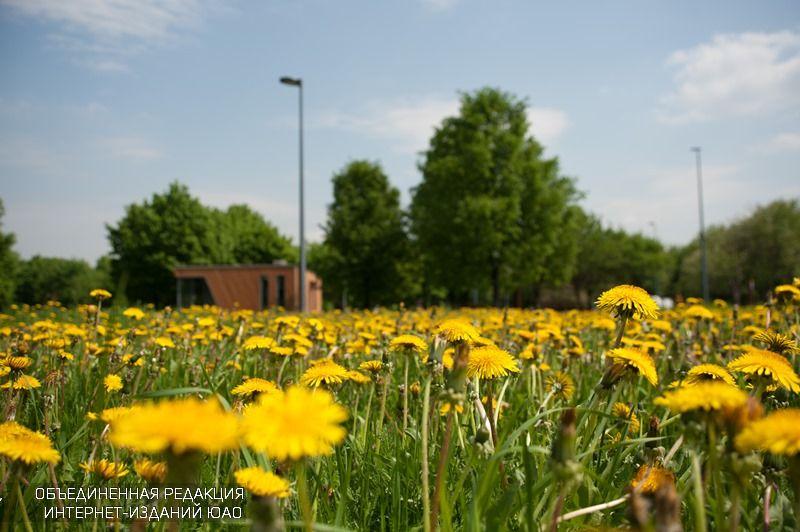 Активный гражданин, голосование, открытие летнего сезона, парк «Садовники», программа