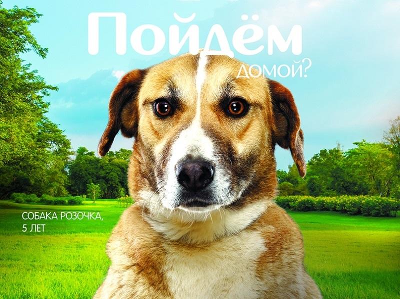 Мосгорпарк, парк «Садовники», «Пойдем домой?», приют, фотовыставка, акция