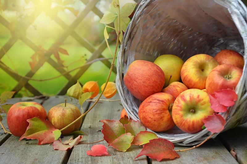 Урожай яблоки пиксабай фото